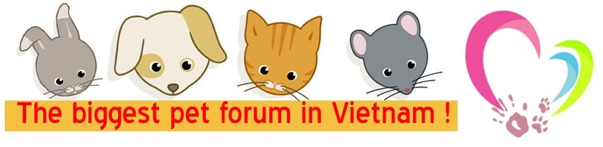 Yêu Thú Cưng - Vietnam's Pet Forum