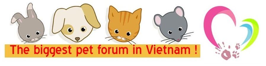 Yêu Thú Cưng - Vietnam's Pet Forum